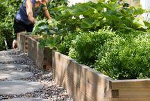 Garden/Yard / by Erica Wanner