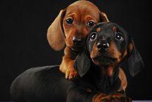 Hund, Katze & Co / Süsse Tierfotos, witzige Bilder von vielen verschiedenen Tieren und tolle Tier Fotos von Haustieren findest du hier!