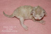 Litter P, born 11.04.2014