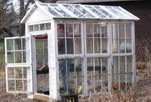 diy greenhouse n plant ideas n info