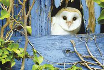 Owls / Owls from around the world