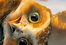 Owl pics