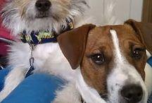 Aletta Roux / Puppies