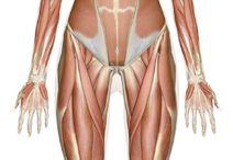 Anatomy / by Jamie Marie