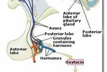nerves, neuronal systems, neuroscience
