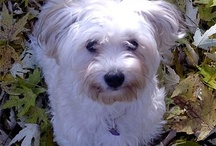tilly dog