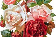 Roses/Róże
