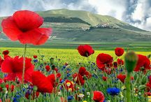 Lethaea papavera mittes / I love poppies