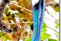 Birds / Pasari