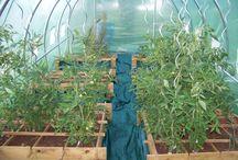 légumes en carrés ds serre