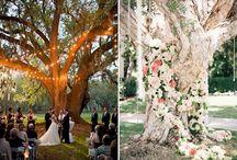 wedding outdoor concept