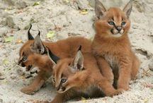 Wunderschöne Tiere