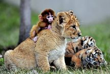 Cute and surprising animal friends