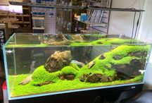 Aquascaping & Home / Aquarium tank inspiration