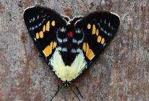 Papillons, libellules, ailes