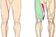 Estudios: piernas