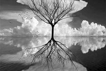Photography Inspiration / by Kira Bowers