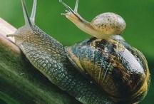 Gastropod / Everything snail / by Kjell Halvorsen