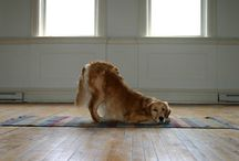 Fit Dogs! / Nutrition, exercise, and weight management for healthy, happy pets.