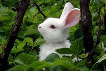Bunny Rabbits / by Barbara Tharp