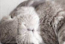 Kanin / Kanin