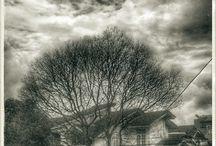 tree / roots #nature #tree #BW #blackandwhite