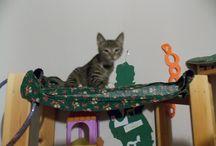 My Cat, Mittens. / He, is a good friend! :D :D