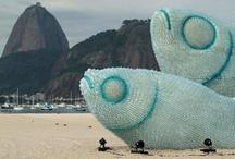 Fish on the beach of brazil