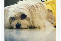 Dog Fashion Spa models / Dog models of Dog Fashion Spa