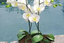 cake flowers theme