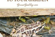 Attracting creatures and critters to your Garden