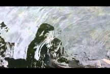 Amazing Videos / by Bill Netter
