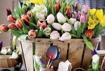 Flowers & Gardens / by SueStitches
