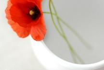 pipacsos-virágos-csöndességes-szelídörömös