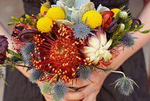 floral / by Stacy Kovats