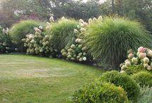 Злаки в саду