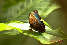 The Living Rainforest Photography / I went to the Living Rainforest and photographed the exotic creatures and fauna.