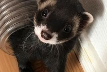 Ferret world