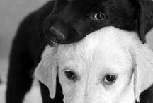 Honden / Zo graag zelf een hond willen....Maar die allergie hè....Dan maar zo.