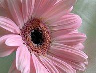 Flower Wars / by Kathy Mackay