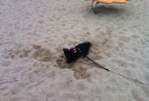 LIlly in Sand