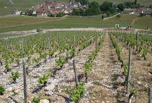 VIP Wine Travel Burgundy