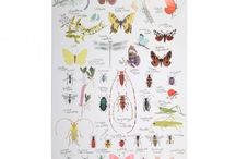 Cooper's Bug Collection / by Cynthia Eccles