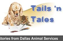 About Dallas Animal Services / by Dallas Animal Services