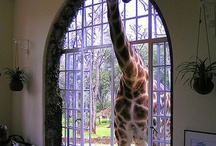 Animals, big n small, short and tall / by Wanda Barcus
