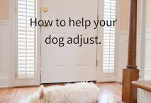 Dogs in the family / Pets are part of the family too! Tips to help your dog or cat interact with your kids, good advice for kid parents and pet parents, and more!