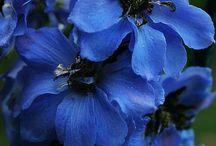 Modrá - Blue / Modrá - Blue