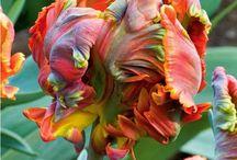 Plantes aux couleurs originales / Découvrez le jardin Willemse aux couleurs originales http://www.willemsefrance.fr/nos-idees-de-jardin/le-jardin-par-couleurs/originales-1.html