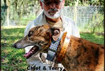 Volunteers at Racing Dog Retirement Project / Volunteers at RDRP loving greyhounds! www.rdrp.org