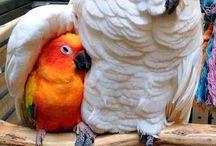とり 鳥 鶏 トリ